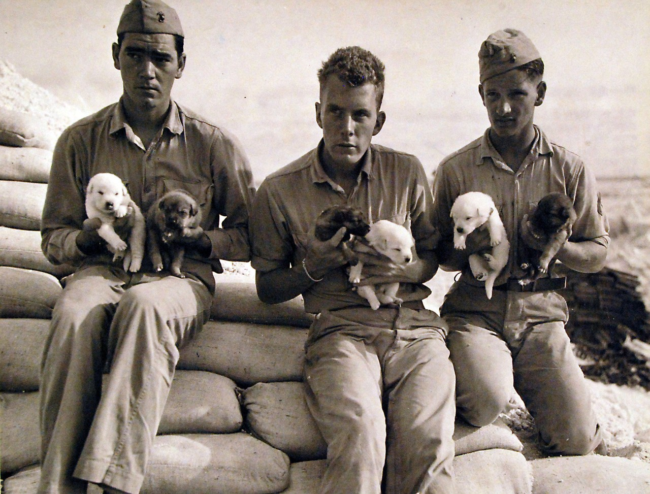 On April 28, 2018, our newest exhibit will open featuring our very own four-legged Navy sailors.