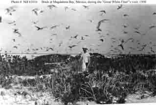 Marine Corps Second Lieutenant Jeter R. Horton surrounded by birds while ashore at Magdalena Bay during Atlantic Fleet's stop there, circa March-April 1908.