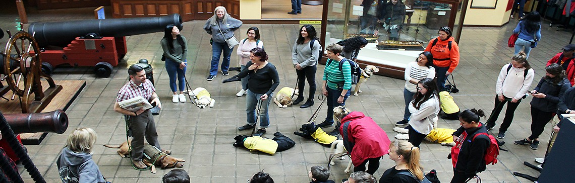 190316-N-PL259-001:  The National Museum of the United States Navy hosted America's VetDogs and the Guide Dog Foundation for the Blind at the Washington Navy Yard, District of Columbia March 16, 2019. The tour gave service dogs in training an opportunity to improve their skills.