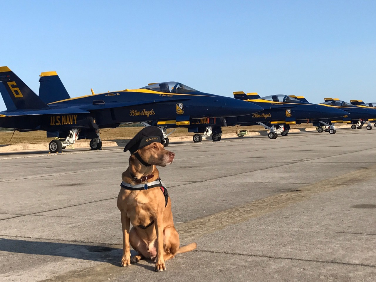 Dog sits in front of Blue Angels flight line.