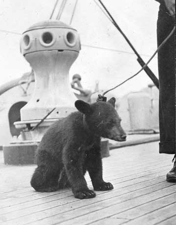 "Buffalo's mascot, ""Teddy,"" on the ship's forecastle during the 1914 Alaskan Radio Expedition. (Naval History and Heritage Command Photograph NH 105596)"