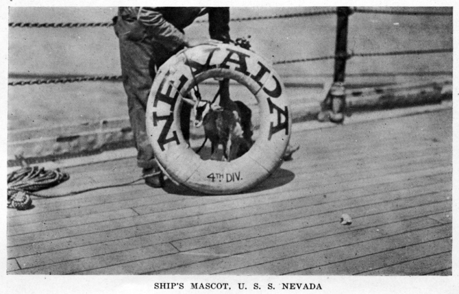 Halftone reproduction of a photograph of the ship's mascot goat, posed in a life ring. It was published circa 1919 as one of ten images in a souvenir folder concerning Nevada. Donation of Dr. Mark Kulikowski, 2007. (Naval History and Heritage Command Photograph NH 104609)