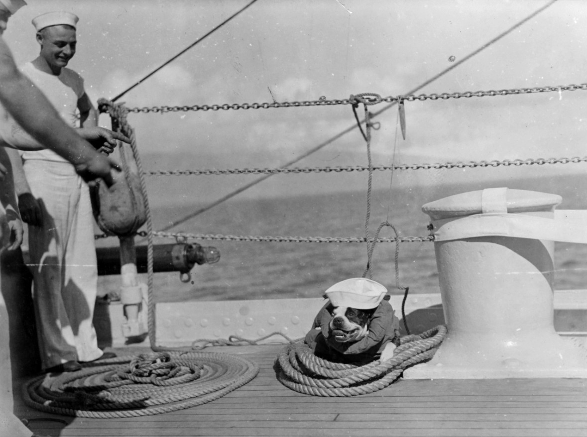 "New York's bulldog mascot, ""Pat,"" in 1932. (Naval History and Heritage Command, NH 50315)"