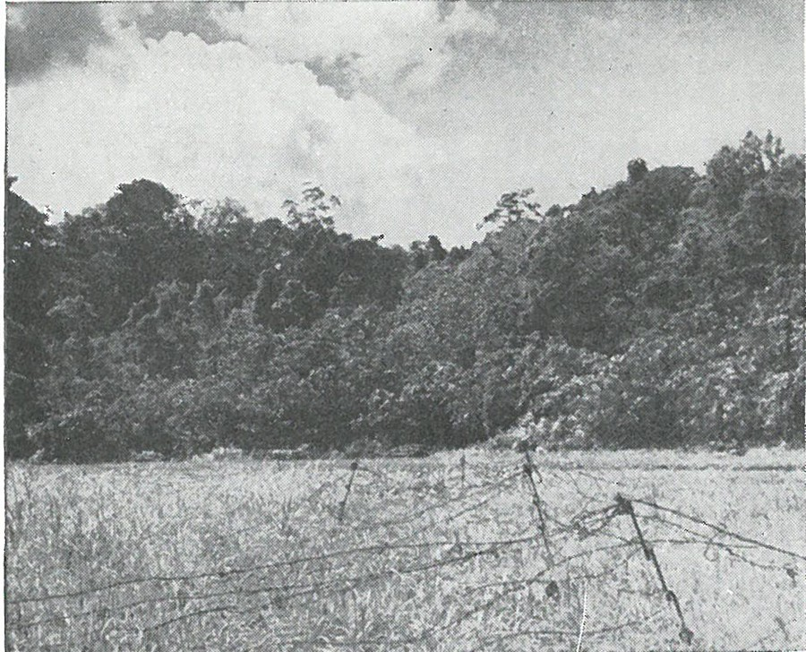 WIRE PROTECTED THE 1ST MARINES' POSITIONS fronting on the grassy plain, across which the Japanese 1st Battalion, 124th Infantry delivered an attack during the Edson's Ridge battle to the west.