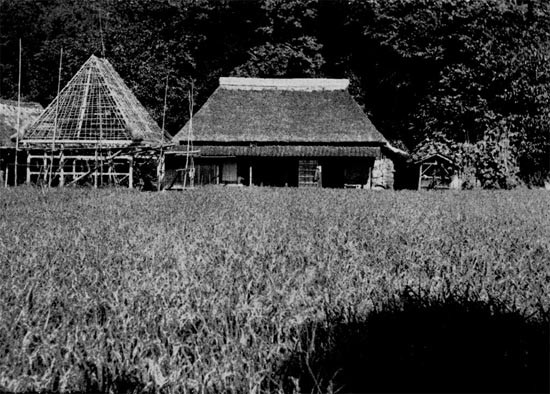 Thatch-roofed Farmer's house