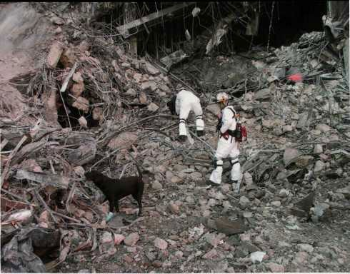 Dogs and handlers in search and rescue operations.