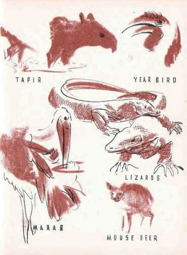 Illustration of animals - tapir, year bird, lizards, marab, and mouse deer.