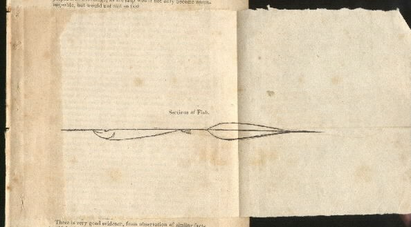 Image of plate pages 2-3 Construction of Ships 'Sections of Fish'